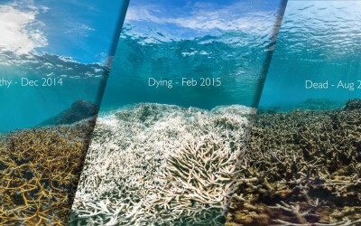 Global Coral Bleaching – 2015/2016
